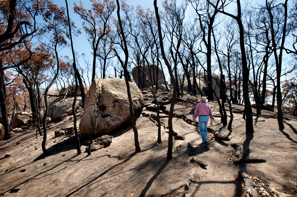 The President Of The Firends Of Black Hill Daryl Kellet walks through the Black Hill Reserve soon after the January Fires to assess the damage.
