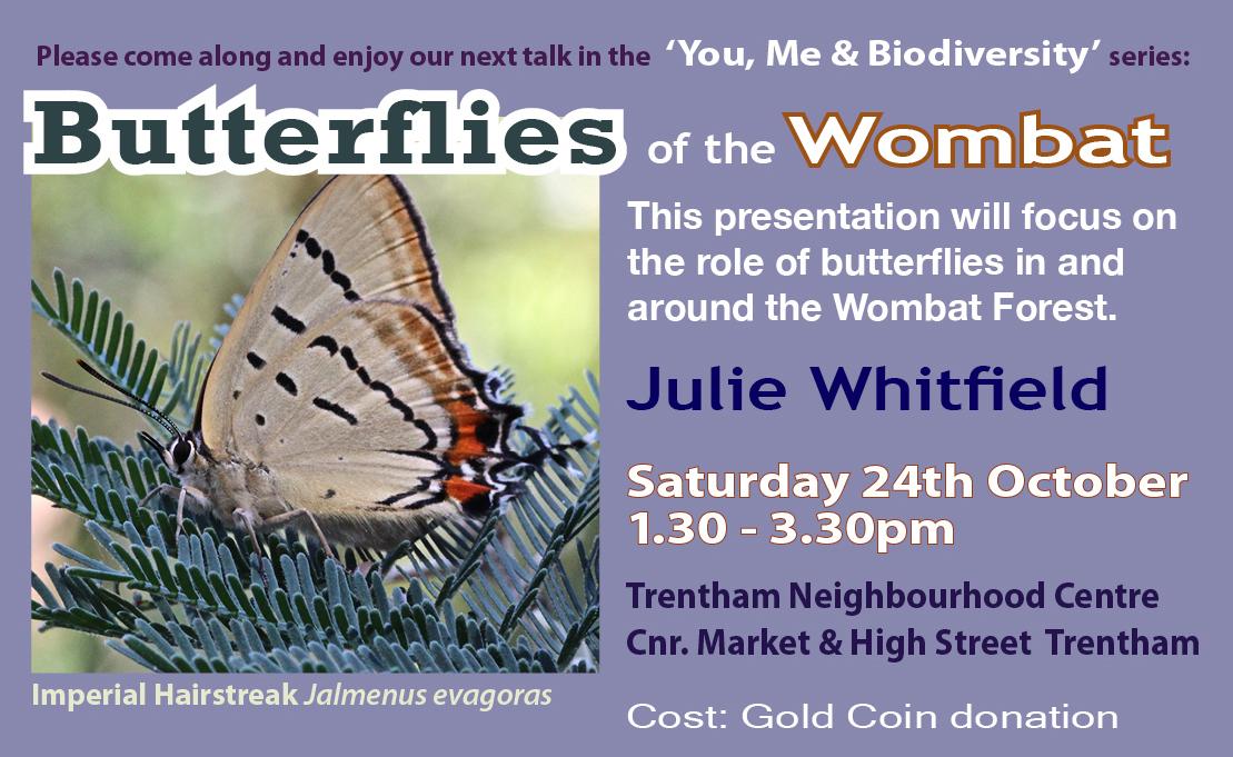 Butterflies fb promo