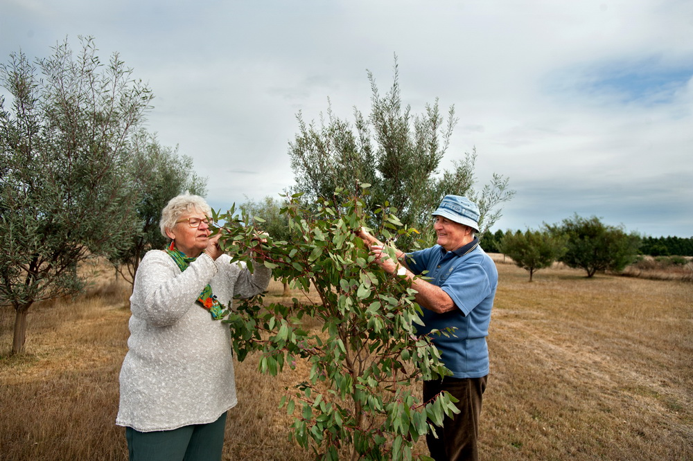 Hanne Juul and Bill Taylor examine some of the trees they previously planted on the John Morieson Biolink in Carlsruhe.