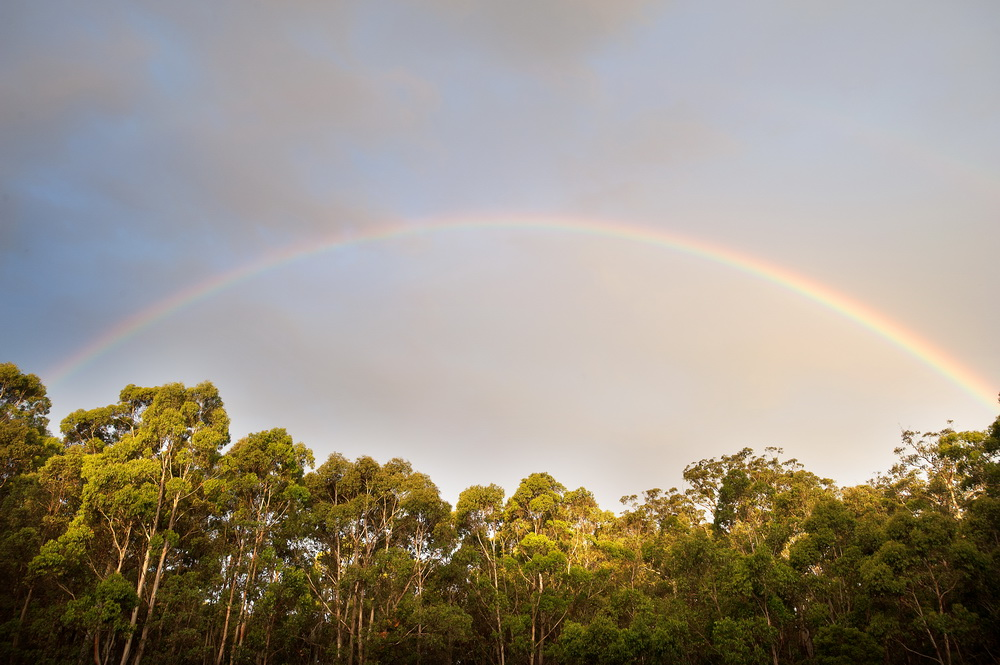 Summer rainbow over the Wombat Forest. ©Scheltema