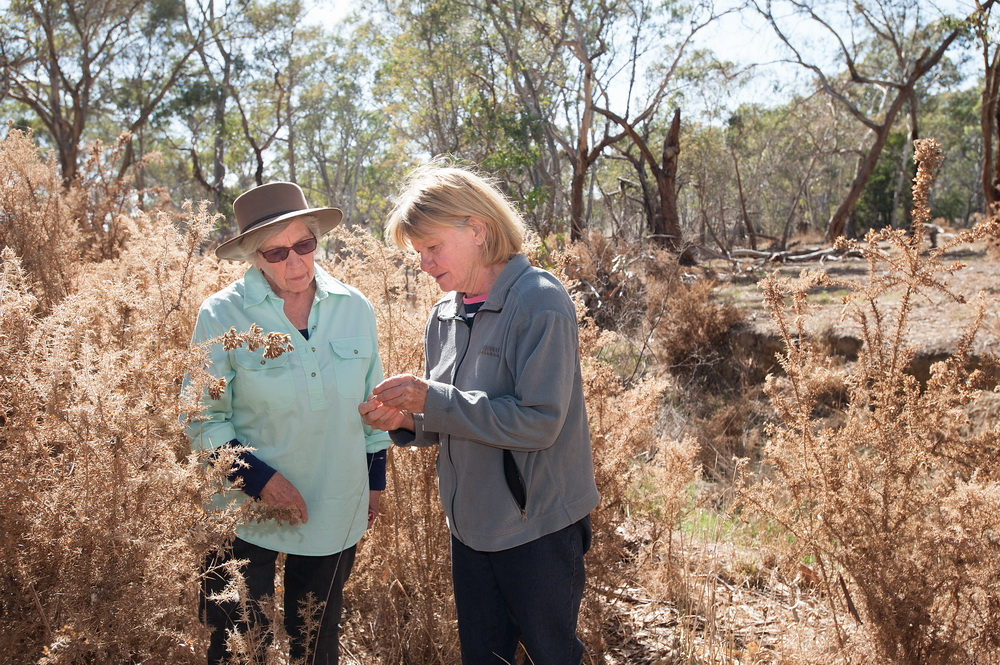 Jan Elder and Barbara James from Campaspe Valley Landcare successfully controlled and stopped the spread of a large infestation of gorse along ?creek through the Good Neighbourhood Program at DELWP©Scheltema