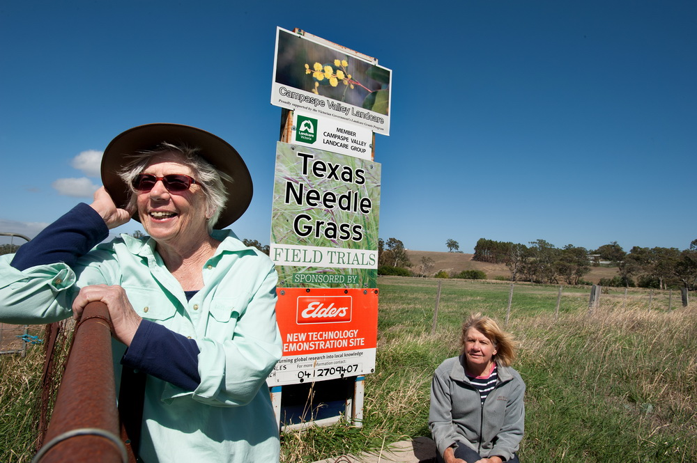 Jan Elder and barbara James from Campaspe Valley Landcare have been hard at working producing a booklet which aims to educate landowners on how to identify and eradicate texas needle grass.©Scheltema
