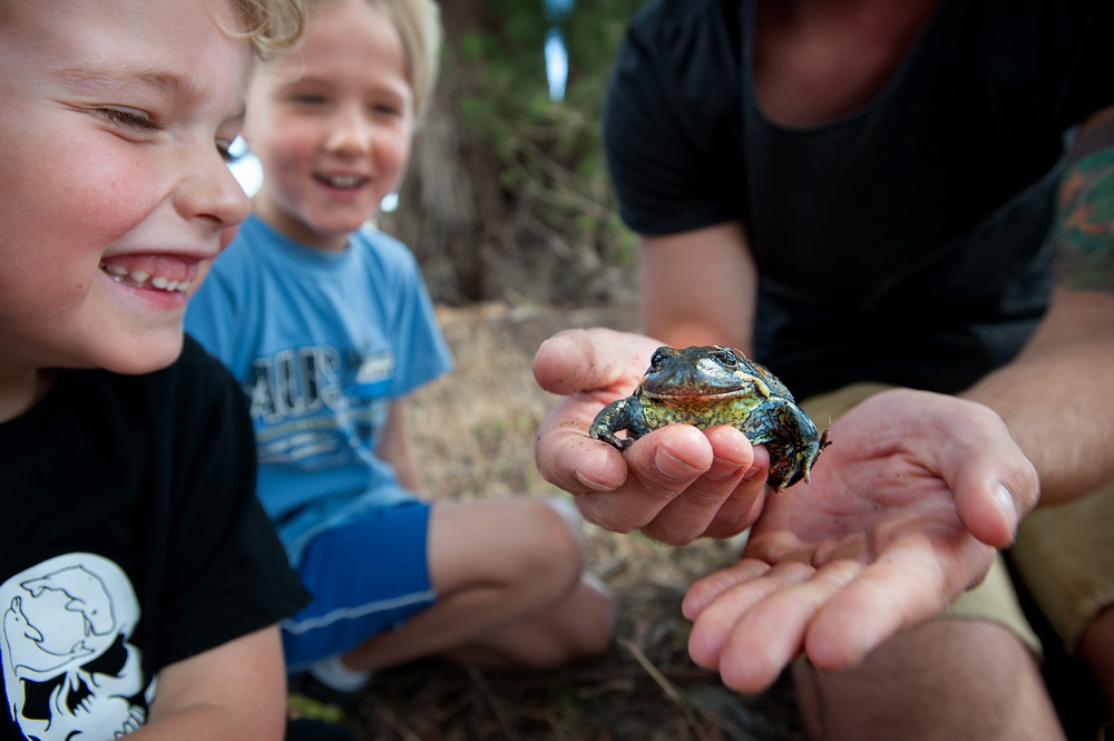 Austin and Oliver May learn about Southern Banjo Frogs at the Creepy Crawly Walk and Talk at Bald Hill Reserve ©Scheltema