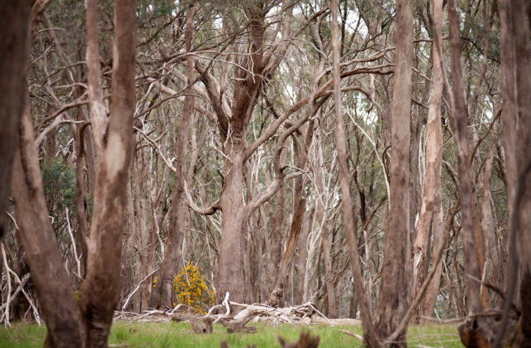 Environmental Science students from Kyneton Secondary College will be working at Bald Hill with the Friends group to install and monitor nest boxes©Scheltema