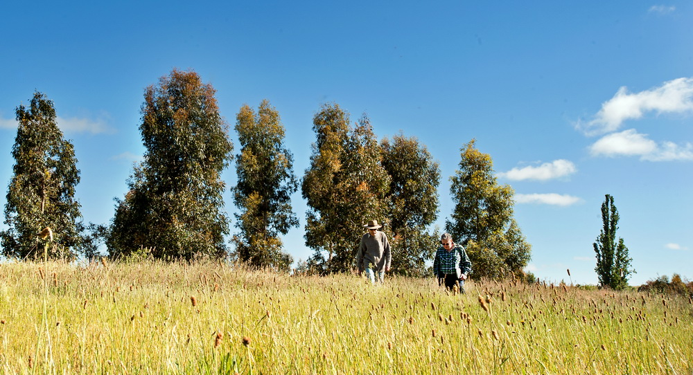 Malmsbury and District Landcare group was succesful in their application for a Victorian Landcare Grant to continue weed removal and revegetation works at the Malmsbury Common.©Scheltema
