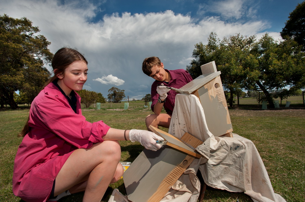 Braemar students hard at work painting nest boxes to be installed at Hanging Rock. ©Scheltema