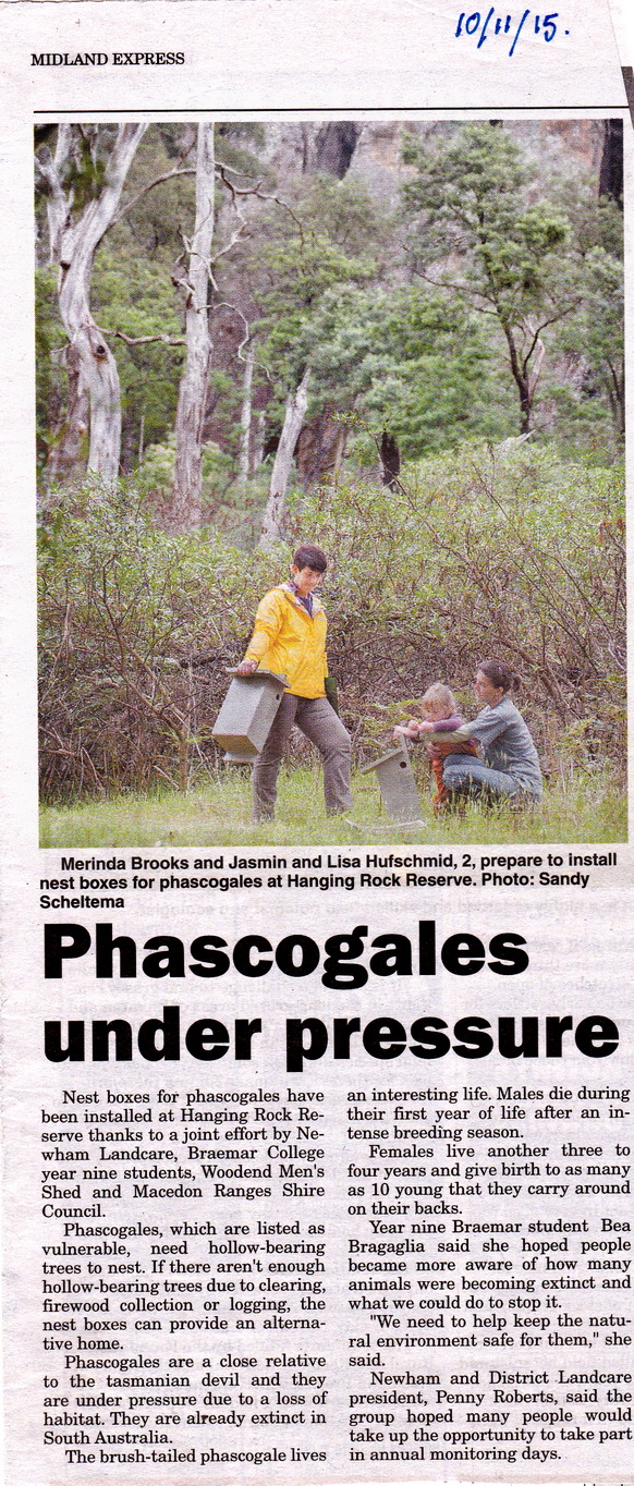 Phascogales2_resize