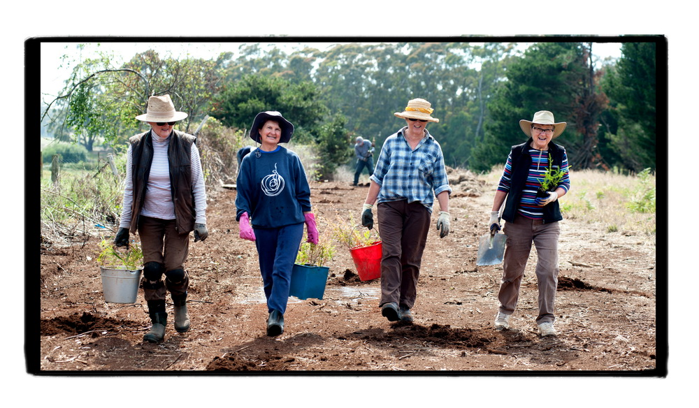 Women from Trentham Landcare planting trees alongside the Domino trail .