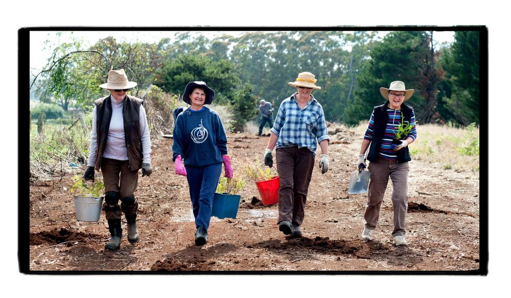 Women from Trentham Landcare planting trees alongside the Domino trail .
