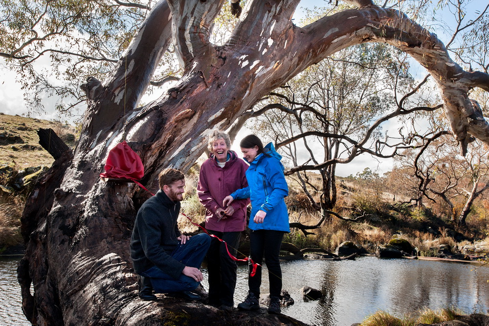 The UCLN Strategic   Plan being unveiled by Mayors from the Macedon Ranges and Mt Alexander Shires,Christine Henderson and  Jennifer Anderson,with Councillor Sebastian Klein from Hepburn Shire Council.The Plan was launched on a redgum tree on the banks of the Campaspe River in Langley.