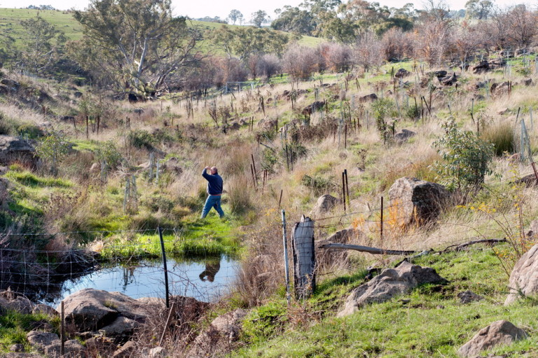 Langley Landcare is continuing with their important work planting along waterways linking the Black Hill Reserve to the Campaspe River.