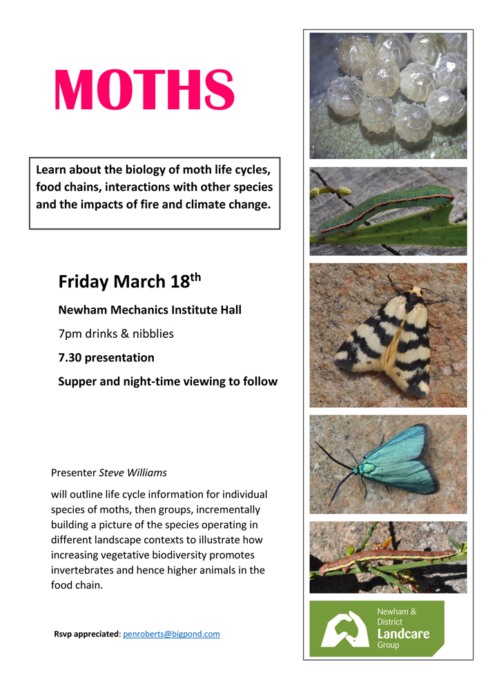 moths flyer (1)-1