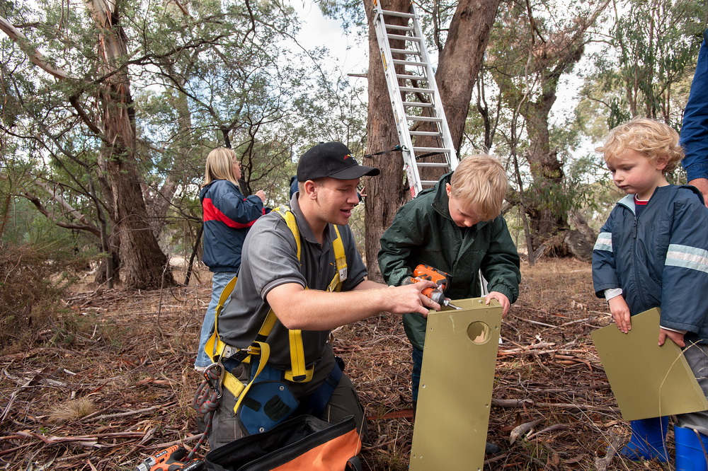Austin and Oliver May (4 and 6 yrs old) were thrilled to be part of a team of people at Bald Hill Reserve on Saturday installing nest boxes for sugar gliders and phascogales. They are seen here with the Environmental Officer of Macedon Ranges Shire Council William Terry.Seven nest boxes were installed  on the day,which were made by the Woodend Mens Shed.The Friends group will work with council to install more in the coming months in an effort to increase the population of the gliders and phascogales.