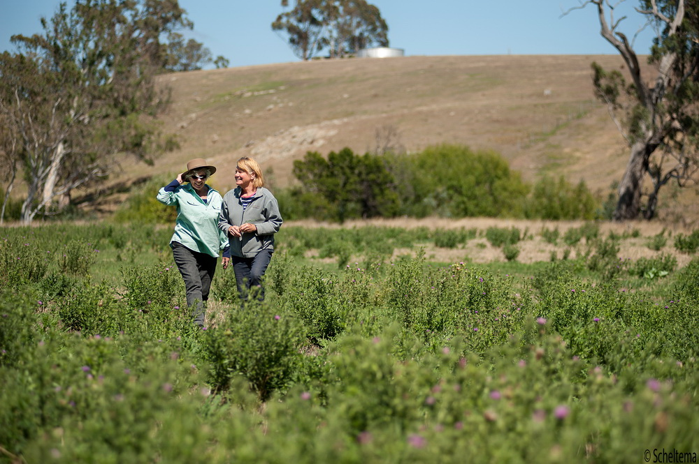 Learn How to identify and address weed problems whether your property is large or small.Jan Elders and Barbara James from Campaspe Valley landcare are seen here discussing weed control techniques in a paddock of thistles.